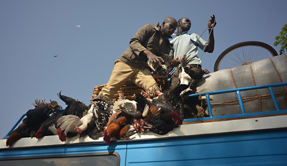 Überall begegnen uns Busse und Lastwagen mit Fracht aus Mensch und Tier – kein Anblick für zarte Gemüter!