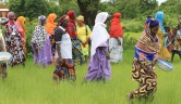 Das Sammeln und Verarbeiten der Nüsse ist traditionell Frauenarbeit.