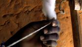 Die Baumwolle wird von Hand gezwirbelt während die Spindel gedreht wird.